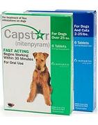 order capstar flea treatment